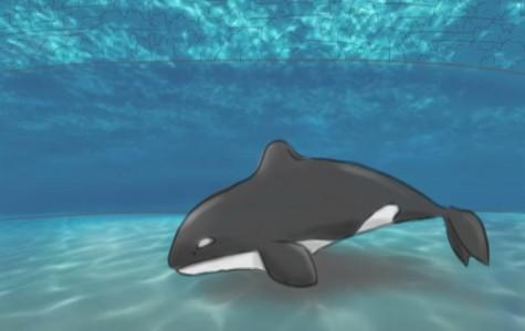 The Last Era of Whales